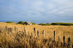 Fence along golden field with old barn. Rustic fence borders a golden field with an old barn overlooking the seashore Royalty Free Stock Images