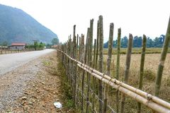 The fence along the road. Bamboo fence separate between field and Stock Photography