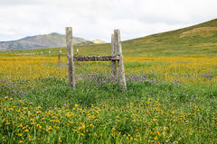 Fence Amid Wildflowers Royalty Free Stock Images