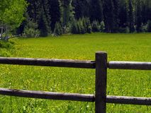 Fence And Field Of Yellow Wildflowers Stock Photography