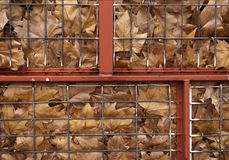 Fence in autumn. Fallen leaves containing Stock Photography