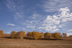 Fence in the autumn grassland. Autumn grassland under the blue sky and white clouds Royalty Free Stock Photos