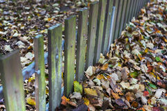 Fence and autumn leaves Stock Photos