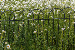 Fence. With the background of daisies royalty free stock photo
