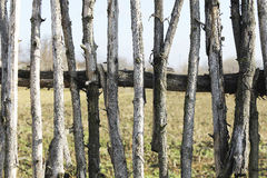 Fence background old wood sticks Royalty Free Stock Photography