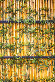 Fence of bamboo, green plants Royalty Free Stock Photography