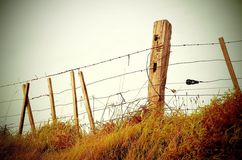 Fence Barb Wire Stock Images
