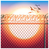Fence with barbed wire and birds Stock Photos