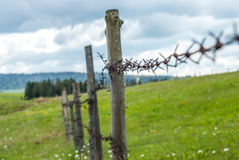 Fence with barbed wire. Fence in the field. Meadow grass with flowers. Stock Photos