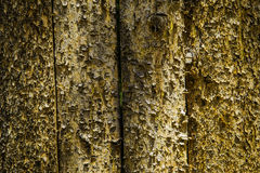 Fence with Bark Stock Image