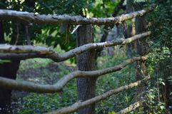 Fence of branches. Remote countryside. Picturesque places. The creation of man. Rural fence Royalty Free Stock Photo