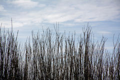 Fence of branches and the sky Royalty Free Stock Photography