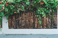Fence with bush Royalty Free Stock Image
