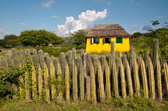 Fence of cactus on the island of Bonaire in the Caribbean stock photo