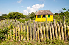 Fence of cactus on the island in the Caribbean. Yellow house and the fence of cactus on the island of Bonaire in the Caribbean Royalty Free Stock Photos