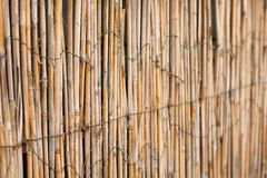 Fence from cane with light from behind Stock Image