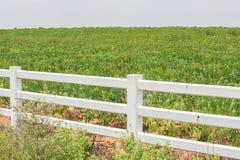 Fence and cassava. Stock Photo