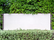Fence Concrete In Nature Garden With Wall Grass Stock Images