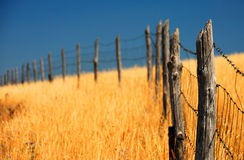 Fence in a corn field Stock Image