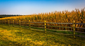 Fence and corn field on a farm in rural York County, Pennsylvani. A Stock Images