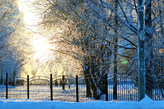 Fence covered snow winter park Stock Image