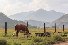 Fence for cows in mountains. Royalty Free Stock Photo
