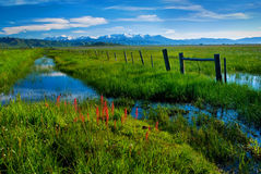 Fence and Creek along a rich green Marsh Royalty Free Stock Photography