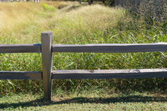Fence and dense grasses Stock Photo