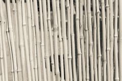 Fence from a dry bamboo of beige color Stock Photos