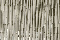 Fence from a dry bamboo of dirty gray color Stock Image