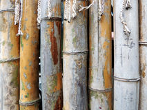 Fence of dry bamboo Stock Images