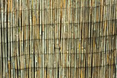 Fence of dry bamboo wood. Texture royalty free stock photo