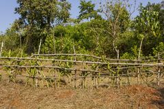 Fence of dry branches and green cacti in rural areas on the field. A fence of dry branches and green cacti in rural areas on the field royalty free stock image