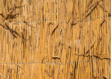 Fence of dry cane Royalty Free Stock Photos