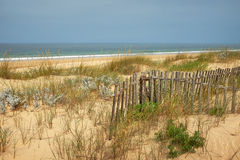 Fence in the Dunes. Landscape of beach with sand dunes with wild vegetation and wooden fence Royalty Free Stock Images