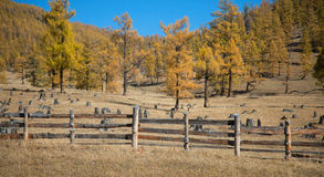 The fence enclosing livestock Royalty Free Stock Photos