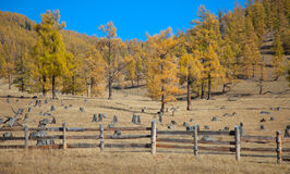 The fence enclosing livestock Royalty Free Stock Image