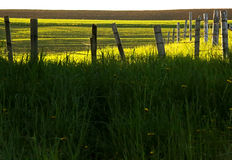 Fence Farm Countryside Royalty Free Stock Photo