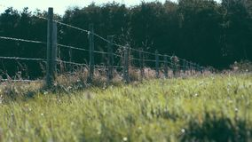 Fence in a field with flowers, Ameland wadden island Holland the Netherlands royalty free stock photo