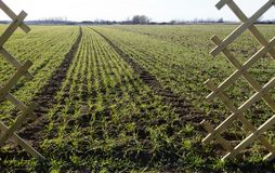 Fence and field with winter grain and furrows Royalty Free Stock Image