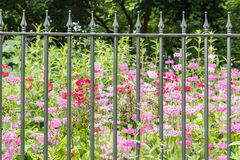 Fence. With the floral background stock image
