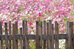 Fence with flower Stock Photo