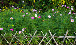 Fence and flowers. Green plants and colorful flowers behind bamboo fence Stock Photos