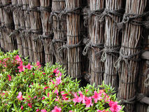 Fence and flowers. Japanese wattle fence and flowers Stock Images