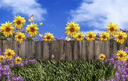 Fence Flowers Blue Sky. An old wood fence with copy space, green grass with sunflowers, purple campanula flowers, butterflies, ladybugs and blue sky in Stock Photo