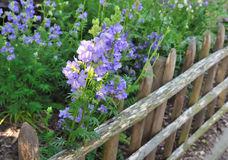 Fence with flowers Stock Images