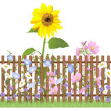 Fence and flowers repeating pattern. Wooden fence and sunflower, cosmea, cornflower and garden daisy flowers, repeating pattern Royalty Free Stock Photo