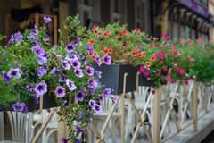 Fence with flowers on Street of Lviv city in summer Stock Image