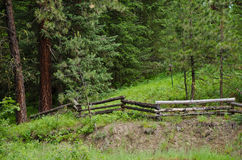 Fence in the Forest Stock Image