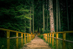 The fence in the forest Royalty Free Stock Photography